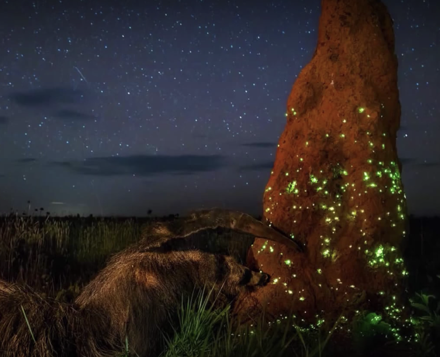 Nature Photography Contest Makes it on Conan O'Brien Show