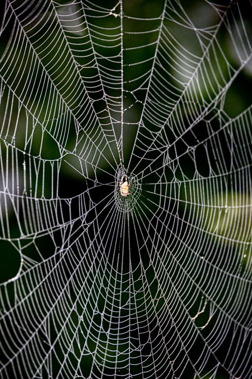 How to Shoot Spider Webs?